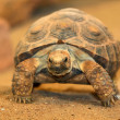 Turtle — Stock Photo #36608381