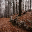 Stock Photo: Autumn mood in forest