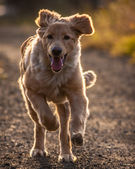 Perro — Foto de Stock