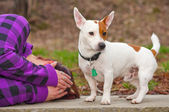 Woman with jack russell terrier — Stock Photo