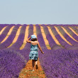 Provence in South of France — Stock Photo #36014259