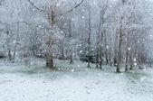 Snowing — Stock Photo