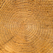 Wood texture — Stock Photo #35320421
