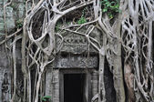 Ta Prohm temple door — Stockfoto