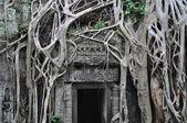 Ta prohm двери храма — Стоковое фото