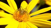 Yellow flowers with butterflies, spiders — Stock Photo