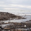 Dirty beach - pollution along the beach — Photo