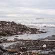 Dirty beach - pollution along the beach — Foto Stock