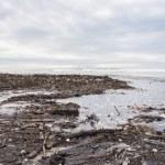 Dirty beach - pollution along the beach — Foto de Stock