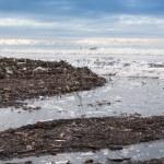 Dirty beach - pollution along the beach — Stock fotografie