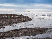 Dirty beach - pollution along the beach — Stock Photo