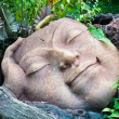 Head of the bed,Buddha head — Stock Photo