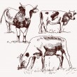 Cow. animal husbandry. set of vector elements — Stock Vector