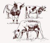 Cow. animal husbandry. set of vector elements — Stock Vector