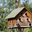 Big wooden nest box for feral pigeons  — Stock Photo