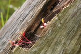 New red plant growing from old tree — Foto Stock