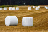 Silage bales — Stock Photo