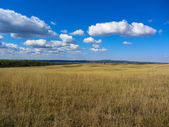 Rural landscape with yellow dry grass and beautifull sky with clouds — Photo