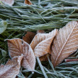 Frost on grass and leaves — 图库照片