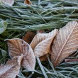 Frost on grass and leaves — Stockfoto