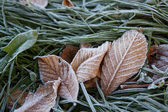 Frost on grass and leaves — Stock fotografie