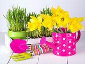 Spring flowers and green grass with garden tools . — Stock Photo