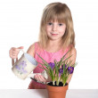 Cute little girl watering the flower. — Stock Photo