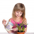 Cute little girl watering the flower. — Stock Photo #42698159