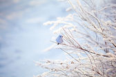 Christmas decoration: bird on white branch on snow background — Stock Photo