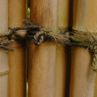 Stock Photo: Tight knot on bamboo