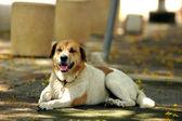 White dog smile and happy — Stock Photo