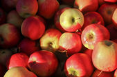 Red fresh organic apples in farmer market in Hobart Tasmania Aus — Stock Photo