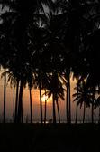 Sunset Divine Tree Silhouettes — Stock Photo