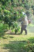 Lawn Mower Man — Stock Photo