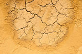 Texture of dry and cracked earth background — Stock Photo