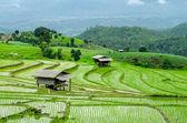 Terraced Paddy Field in Mae-Jam Village , Chaingmai Province , Thailand — Stock Photo