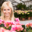 Young attractive smiling woman in a florists greenhouse in between colourful flowers — Stock Photo