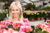 色とりどりの花の間に花屋温室で若い魅力的な笑顔の女性 — ストック写真