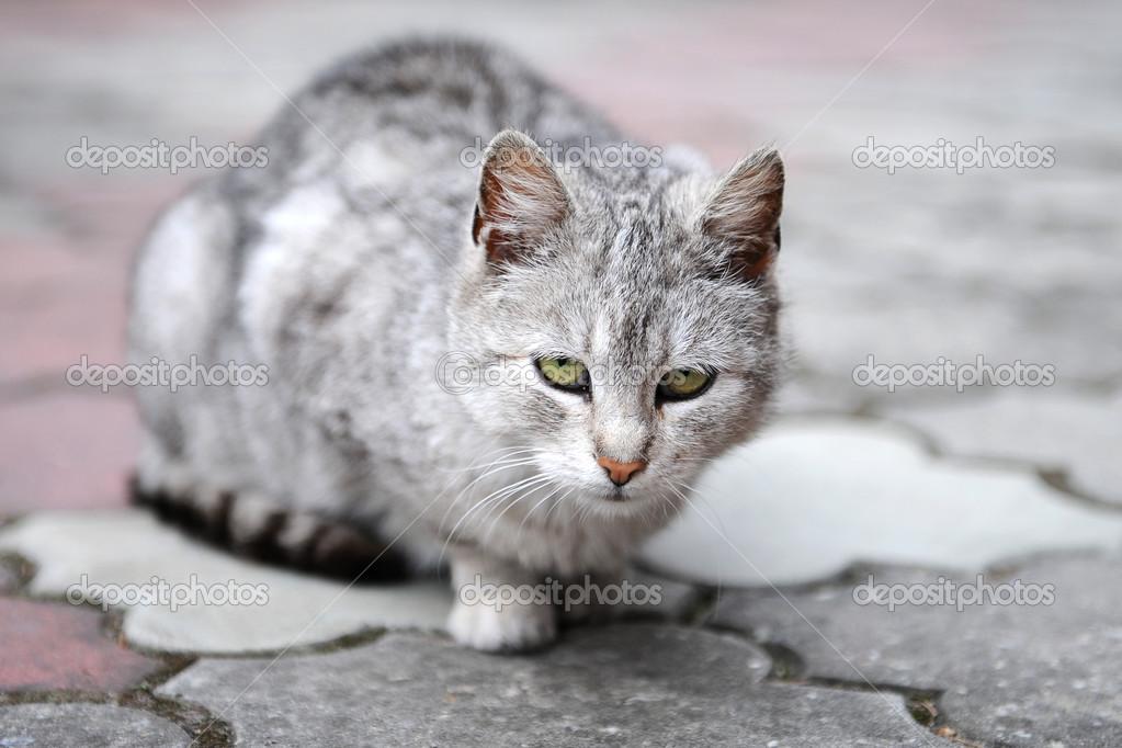 伤心的猫– 图库图片
