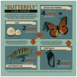 Stock Vector: Butterfly's life cycle