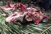 Slaughtered cow as sacrifice at funeral — Stock Photo