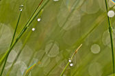 Shining water drops on grass blade — Stockfoto
