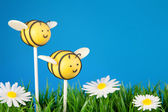 Bee cake pops — Stock Photo