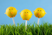 Easter chick cake pops — Stock Photo
