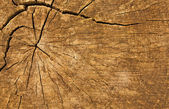 Wood log texture for background — Stock Photo
