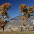 Autumn Colors in Yellowstone NP — Stock Photo