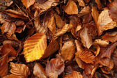 Dead beech leaves on the ground in November, Asturias. Spain. — Stock Photo