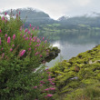 Norwegian fiord with pink flowers — Stock Photo
