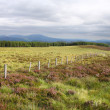 Fence in scottish moorland, Scotland. UK. — Stock Photo