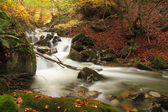 Stream in a autumnal beech forest, Asturias. Spain. — Stock Photo